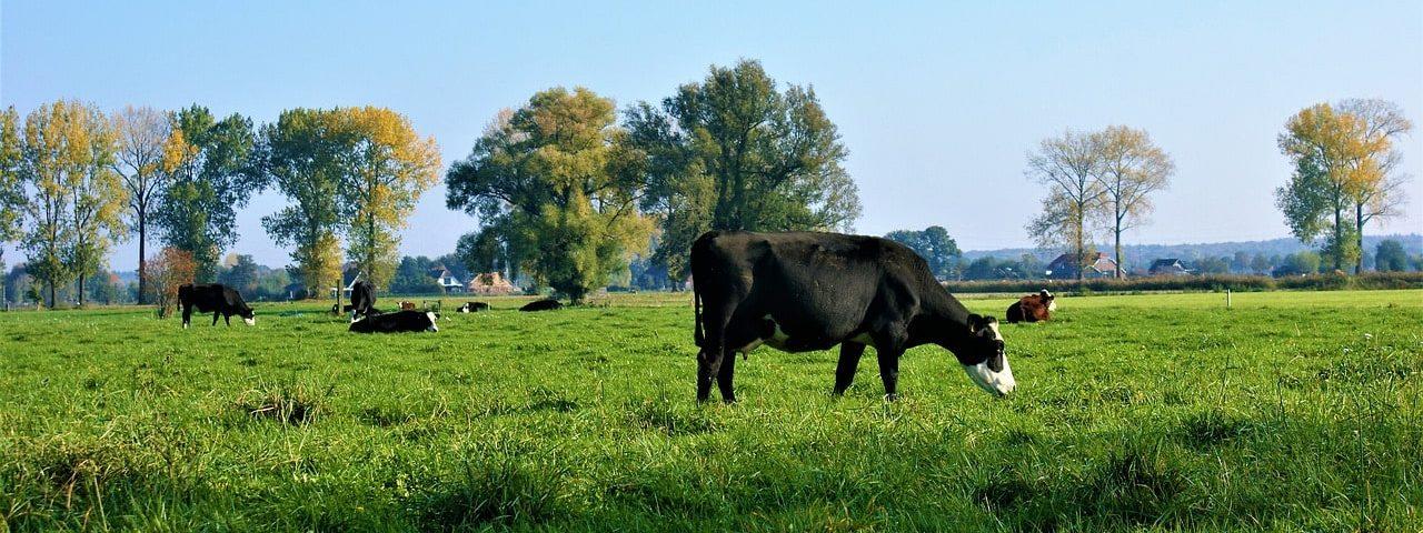 het melken van koeien care4cows.nl